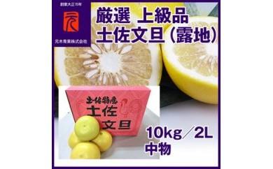 BB402厳選上級品 土佐文旦(露地)/10kg/2L 中物(丸秀・ムジ)/元木青果/【1250pt】