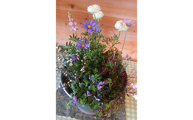 C-044 季節の花の寄せ植え 35㎝