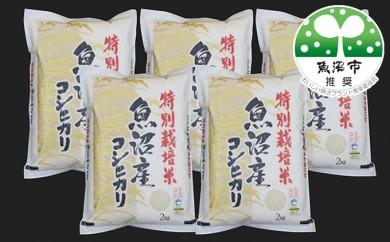 [№5762-0119]特別栽培米魚沼産コシヒカリ 2kg×5袋