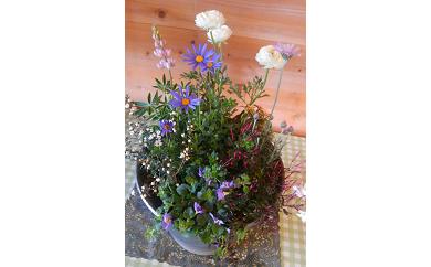 C-045 季節の花の寄せ植え 35㎝  ピック付き