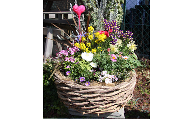 C-046 季節の花の寄せ植え 40㎝
