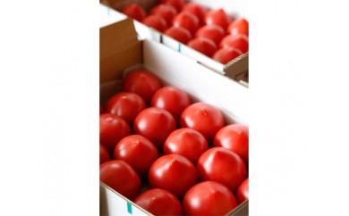 No.096 根本さん家のこだわりフルーツトマト