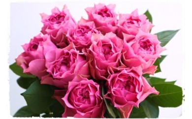 OKM05 ジャパンフラワーセレクションで日本一に輝いた最高級のバラ「さざ波」! ローズガーデン徳島 さざ波10本 寄付額29,000円