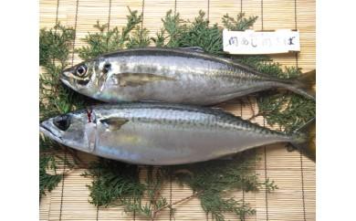 No.335 関あじ・関さば(鮮魚)セット(各1尾)【30pt】