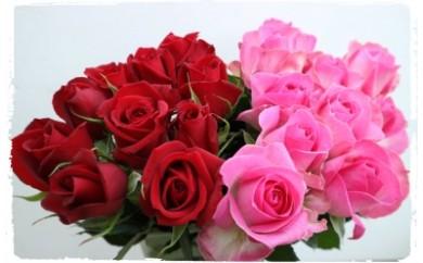 OKM01 日本一に輝いた阿波のバラをお届け! ローズガーデン徳島 阿波バラ20本 寄付額11,000円
