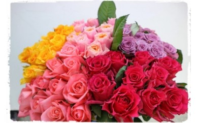 OKM04 日本一に輝いた阿波のバラをお届け! ローズガーデン徳島 阿波バラ50本 寄付額26,000円