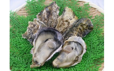 A206 鮮度そのまま!国産殻付き岩牡蠣