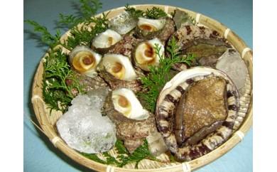 166.あわび・さざえ海の貝セット