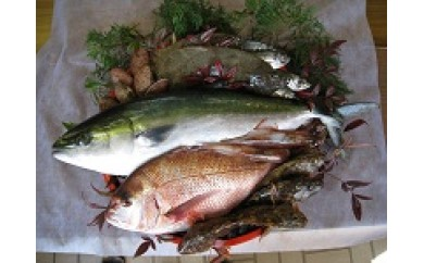 29A-002 山口県漁協大海の海の幸セット(年間4回)【100,000pt】