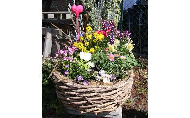 B-011 季節の花の寄せ植え 40㎝