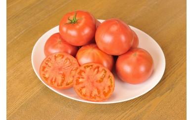 期間限定!!「岡本農園」フルーツトマト