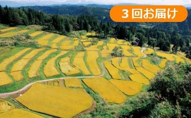 【D2904】魚沼産コシヒカリ こだわりの棚田米定期便30kg(10kg×3回)