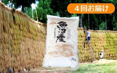 【C2903】魚沼産コシヒカリ はざかけ米定期便12kg(3kg×4回)