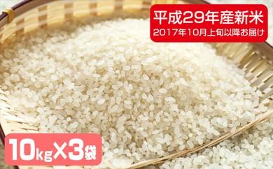 [№5641-0274]滝川産 特別栽培ななつぼし30kg