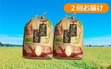 【C2901】魚沼産コシヒカリ 定期便20kg(10kg×2回)