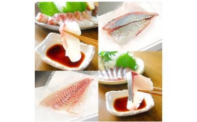 (E-15)延岡産活〆真鯛とシマアジの豪華お刺身セット