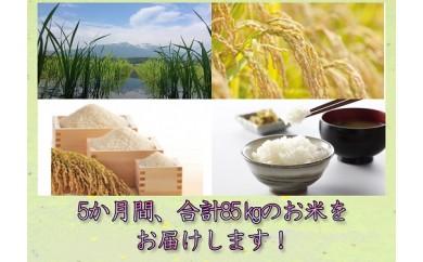 S9915‐00‐99 ちょっとばしの贈り物コース(特別栽培米×5か月)【3月~7月】