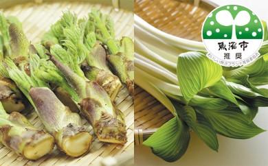 [№5762-0014]「魚沼からのお届け物」促成山菜セット