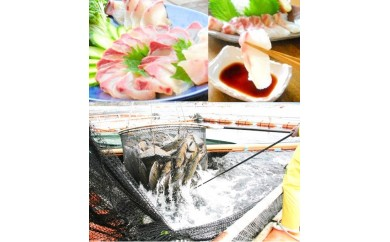 (E-17)延岡産活〆カンパチと真鯛の新鮮お刺身セット