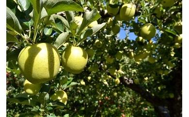 B-5 穴水産葉とらんりんご