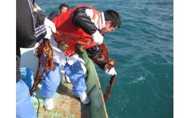 上ノ加江漁港 漁業体験ペアチケット
