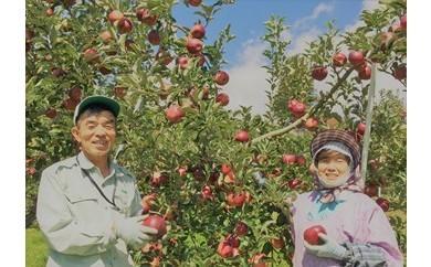 802*信州小川村成就地区限定リンゴの樹オーナー
