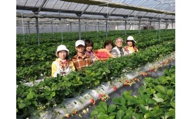 C-65 【先行予約】小川農園のいちご狩り体験