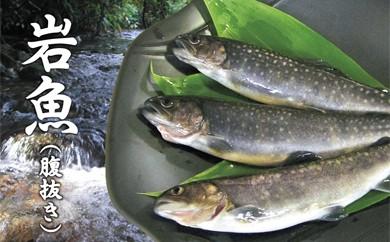 005-005  西塚農場産 岩魚冷凍10尾(腹抜き)