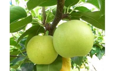 ◆【A14】なつひめ [梨](5kg箱)※平成30年収穫分・早期予約