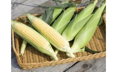 4 高橋農産鮮度抜群とうもろこし(味来)