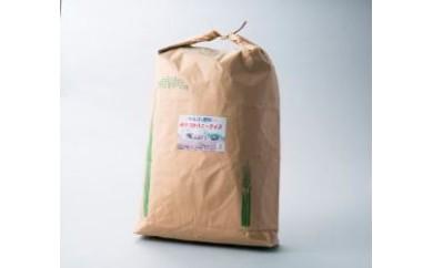 c5 ハニーライス白米  キヌヒカリ(30kg)