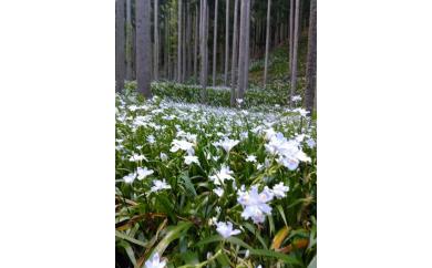 AG26 森林セラピー体験チケット【7500pt】