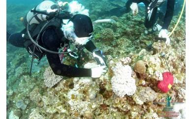 【SeaSeed】養殖サンゴ8株の移植放流