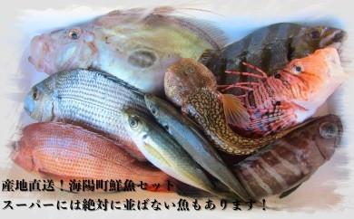 TMG01 産地直送!黒潮でもまれた新鮮な魚をお届けします! 海陽町鮮魚セット(中) 寄付額11,000円