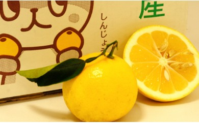 【予約受付中】小夏(日向夏)10kg 2019年収穫
