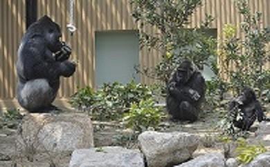 1. 京都市動物園観覧券(ペア)