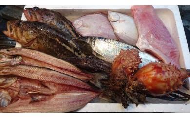 【A1701】プロが選んだ おまかせ小樽鮮魚セットA