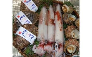 074 鳥取県産 夏の旬な鮮魚セット