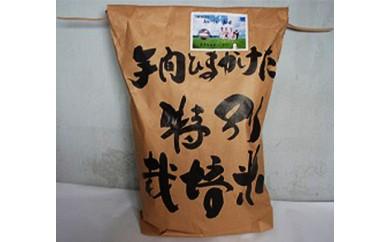 米(ハツシモ) 30kg(玄米)【限定30セット】
