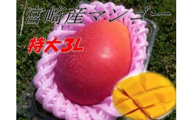 B267 甘さにびっくり!「特大3L完熟マンゴー」