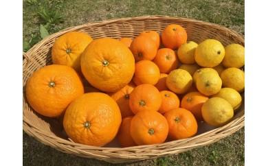 [Ca-03]湯の花 季節のフルーツセット2か月分