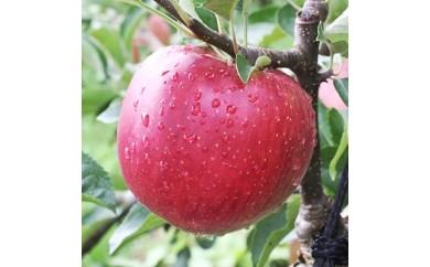芳醇な香り 長野県産深紅色りんご(秋映) 5キロ 秀品