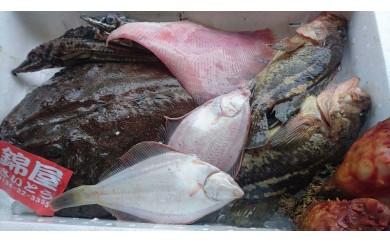 【C1701】プロが選んだ おまかせ小樽鮮魚セットC
