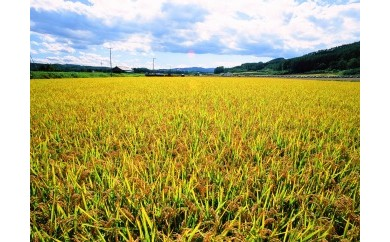 【A015-10】今井農場 あっぱれ米金印10㎏(精米)