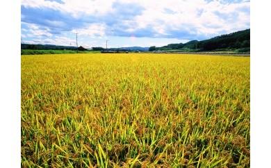 【B025-3】今井農場 あっぱれ米金印20kg(精米)