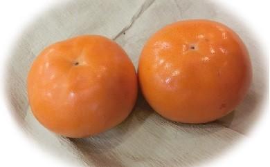 【E-18】輝太郎(柿)