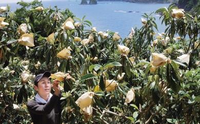 ヤマデ農園 びわ8パック 平成31年収穫分
