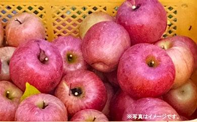 29-A61 キズありサンふじ(ご家庭用)10㎏