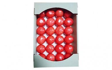 [№5758-0106]市川で大人気の与五郎農園のトマト(桃太郎ファイト)