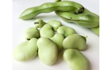 No.065 文ちゃん農園の そら豆 約3kg